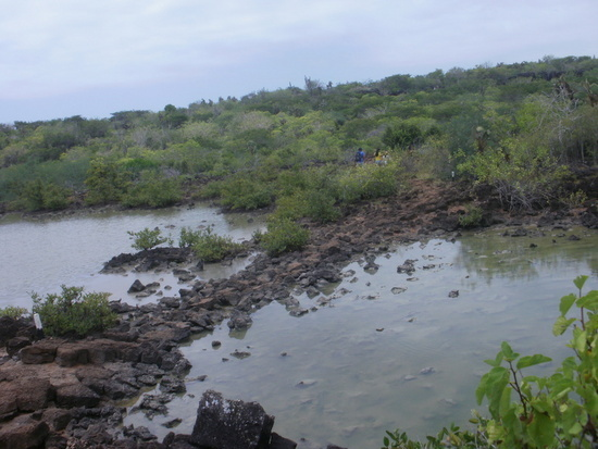 Las Grietas Lagoon on Santa Cruz Island, Galapagos. What Part of the Hike Looks LIke