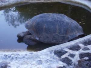 Center for Land Tortoises on Santa Cruz Island, Galapagos
